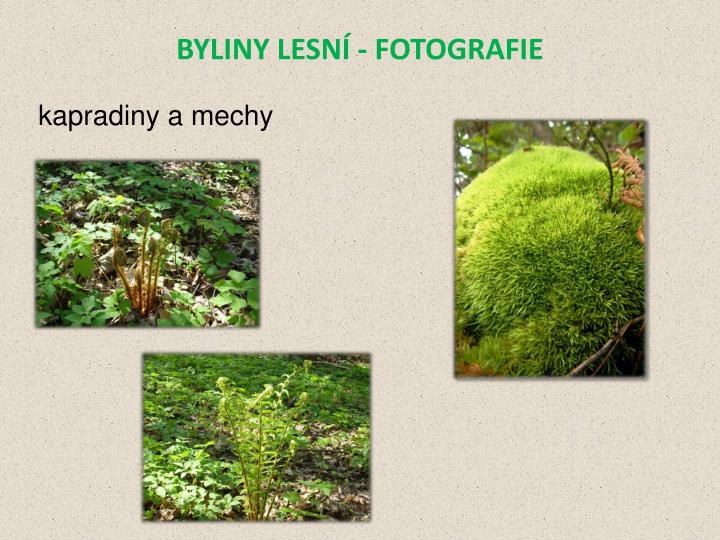 BYLINY LESNÍ - FOTOGRAFIE