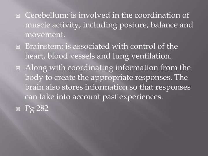 Cerebellum: is involved in the coordination of muscle activity, including posture, balance and movement.