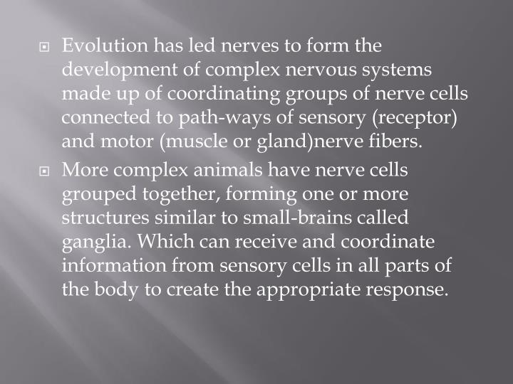 Evolution has led nerves to form the development of complex nervous systems made up of coordinating groups of nerve cells connected to path-ways of sensory (receptor) and motor (muscle or gland)nerve fibers.
