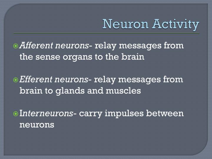 Neuron Activity