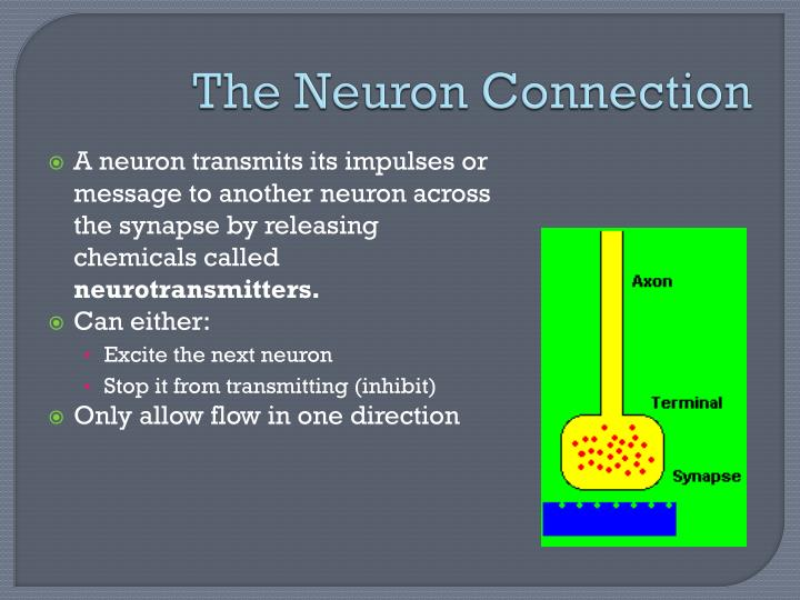 The Neuron Connection
