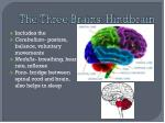 the three brains hindbrain
