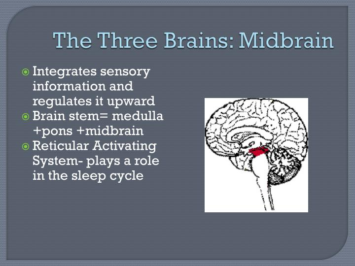 The Three Brains: Midbrain