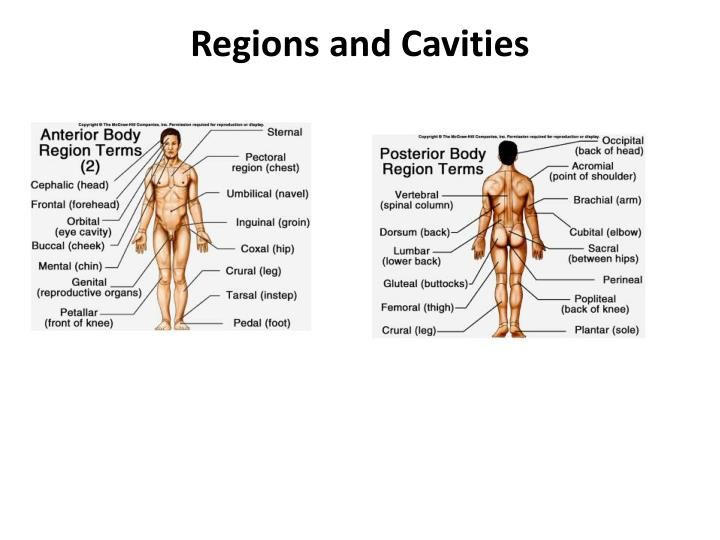Regions and Cavities