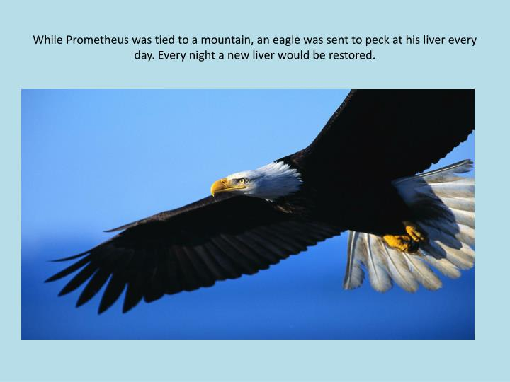 While Prometheus was tied to a mountain, an eagle was sent to peck at his liver every day. Every night a new liver would be restored.