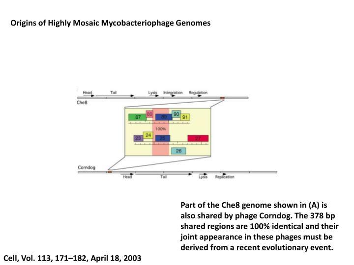 Origins of Highly Mosaic Mycobacteriophage Genomes