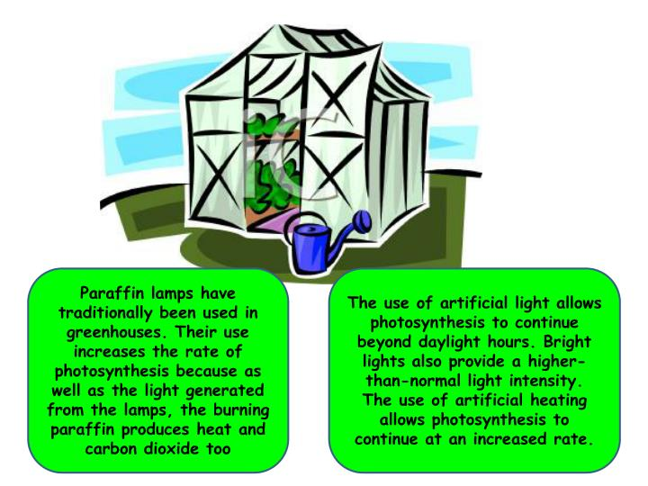 Paraffin lamps have traditionally been used in greenhouses. Their use increases the rate of photosynthesis because as well as the light generated from the lamps, the burning paraffin produces heat and carbon dioxide too