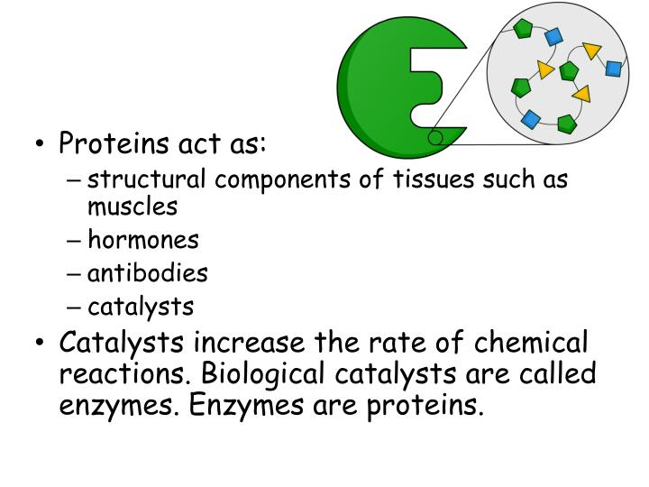 Proteins act as: