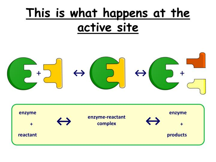 This is what happens at the active site