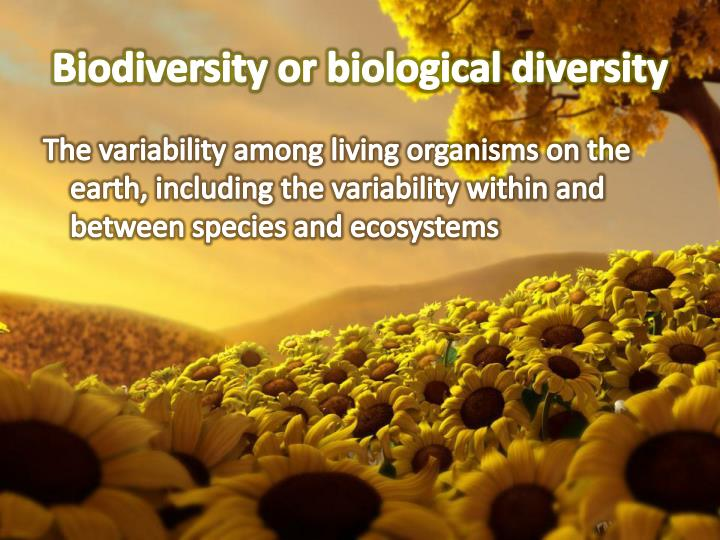 Biodiversity or biological diversity
