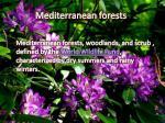 mediterranean forests