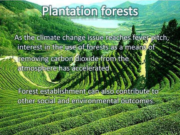 Plantation forests