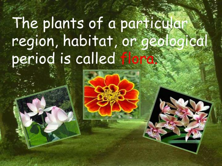 The plants of a particular region, habitat, or geological