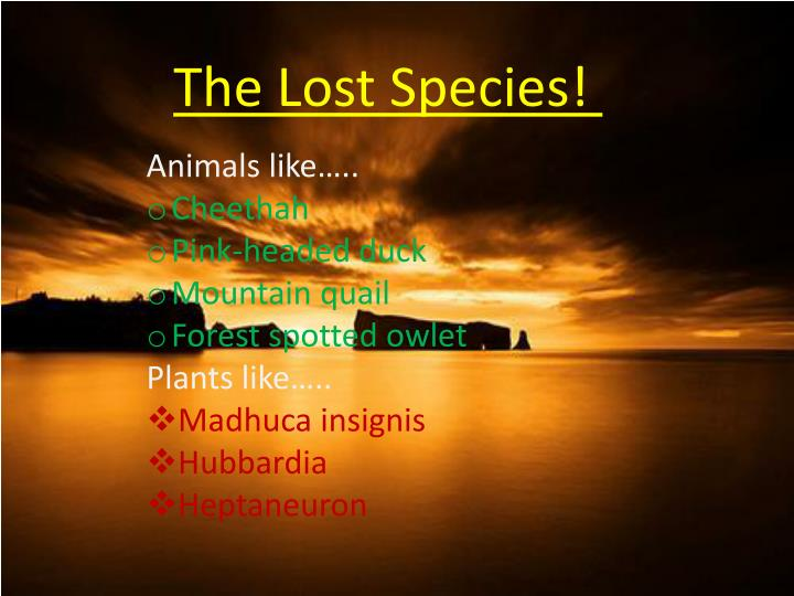 The Lost Species!