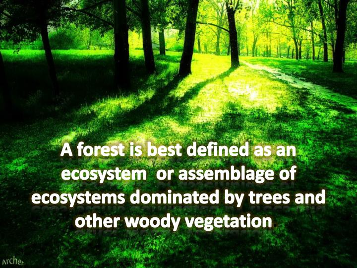 A forest is best defined as an ecosystem  or assemblage of ecosystems dominated by trees and other ...