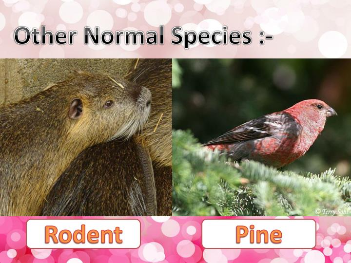 Other Normal Species :-