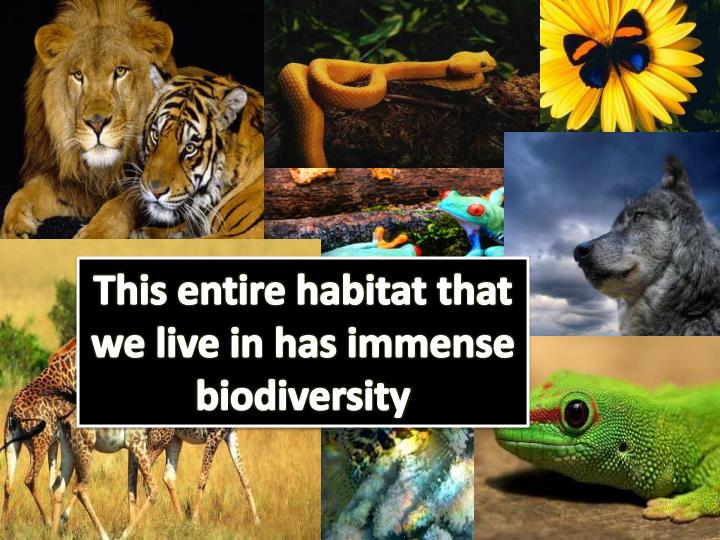 This entire habitat that we live in has immense biodiversity