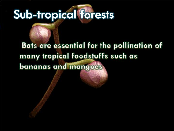 Sub-tropical forests