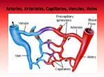arteries arterioles capillaries venules veins
