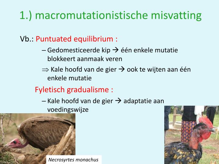 1.) macromutationistische misvatting