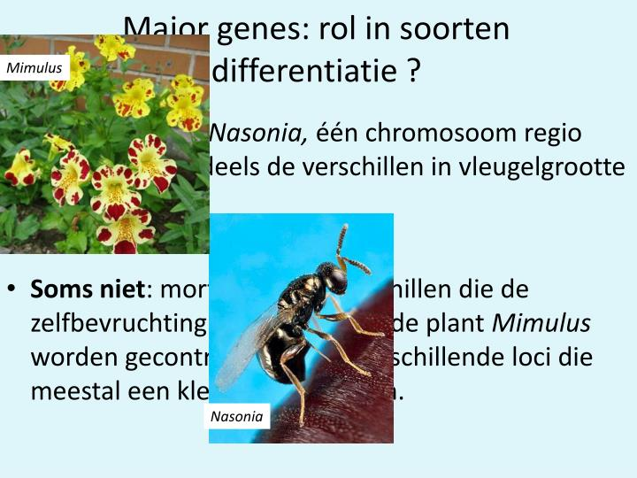 Major genes: rol in soorten differentiatie ?