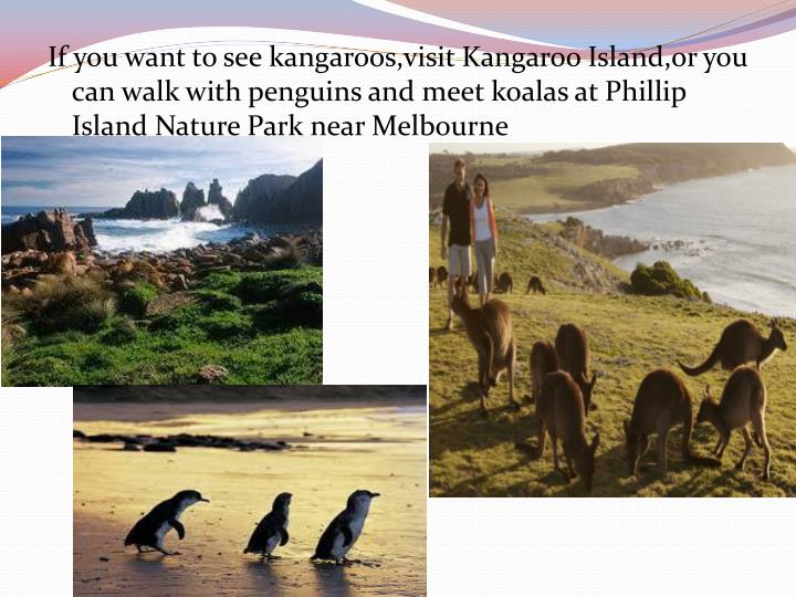 If you want to see kangaroos,visit Kangaroo Island,or you can walk with penguins and meet koalas at Phillip Island Nature Park near Melbourne