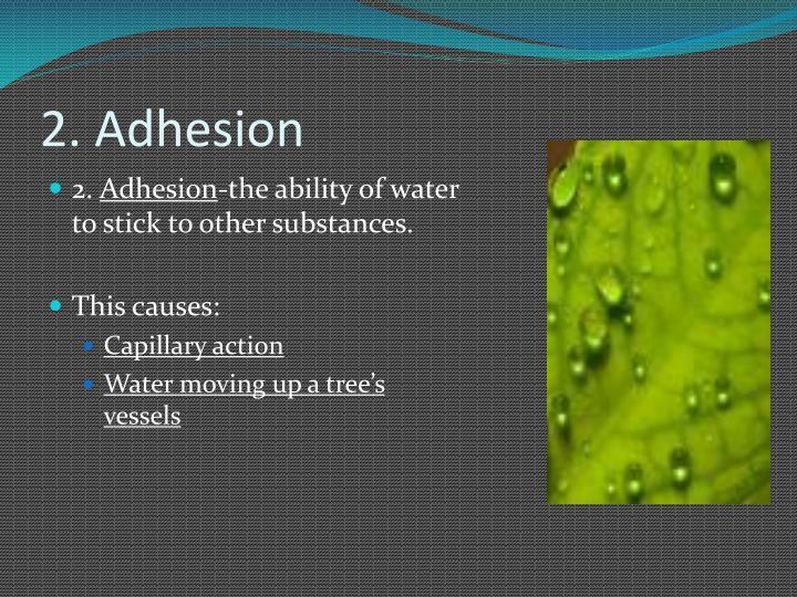 2. Adhesion