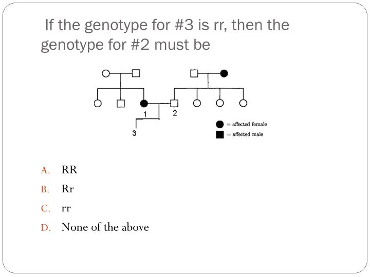 If the genotype for 3 is rr then the genotype for 2 must be