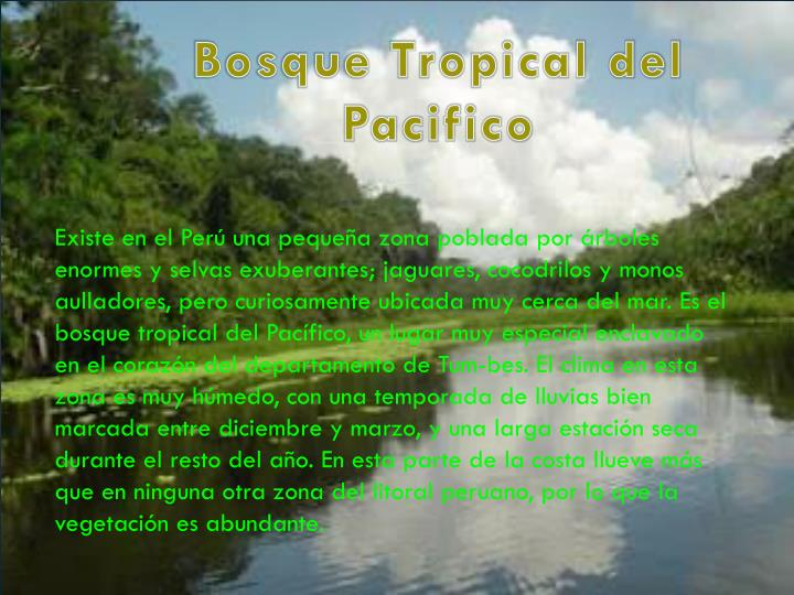 Bosque Tropical del Pacifico