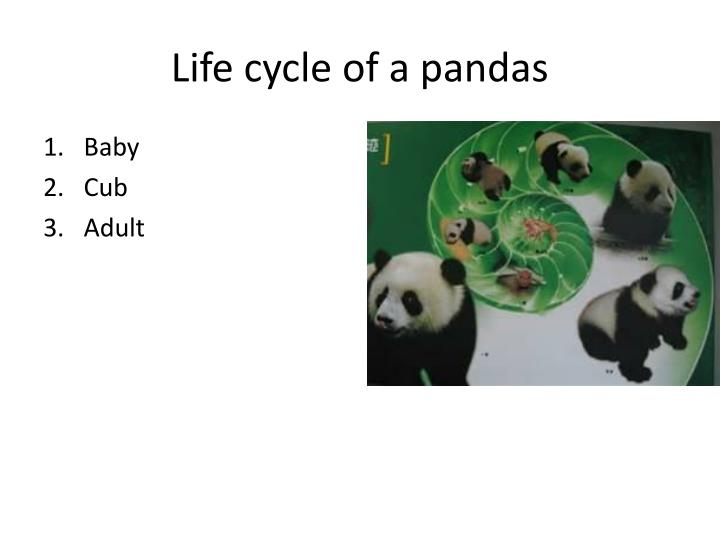 Life cycle of a pandas