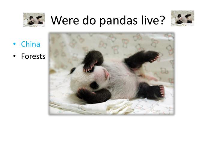 Were do pandas live?