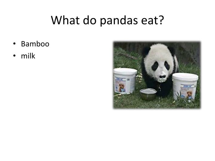 What do pandas eat?