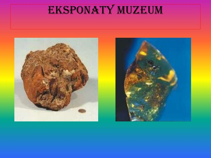 Eksponaty muzeum