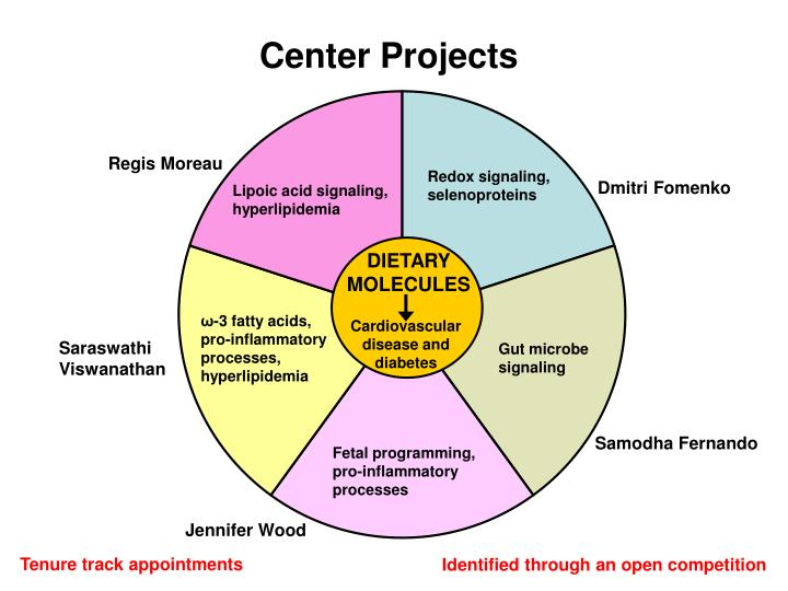 Center Projects
