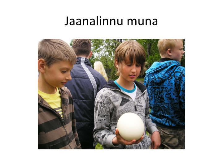 Jaanalinnu muna