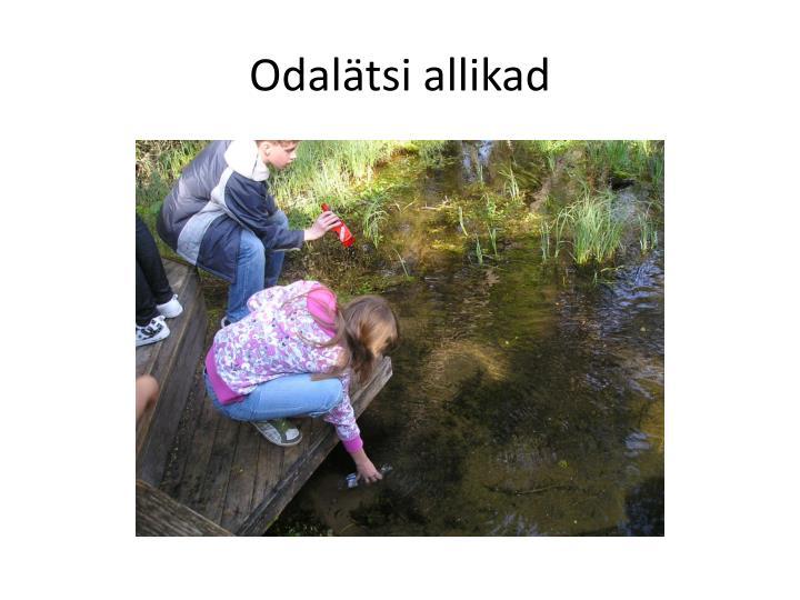 Odalätsi
