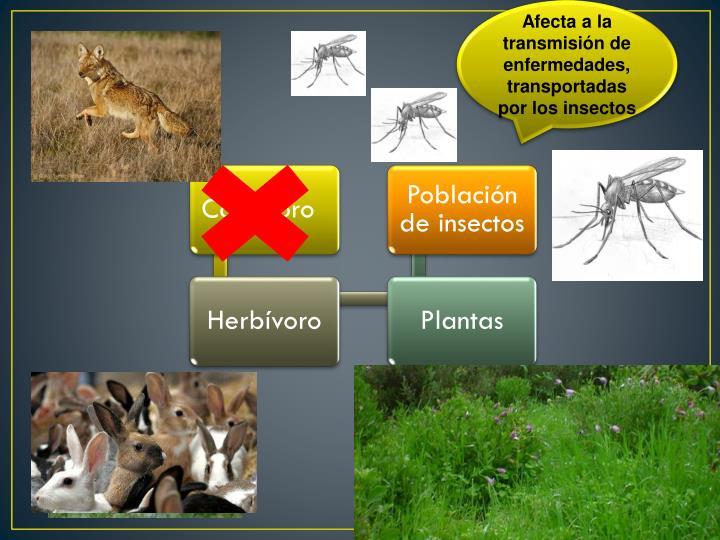 Afecta a la transmisión de enfermedades, transportadas por los insectos