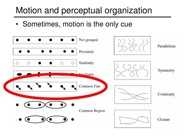 Motion and perceptual organization