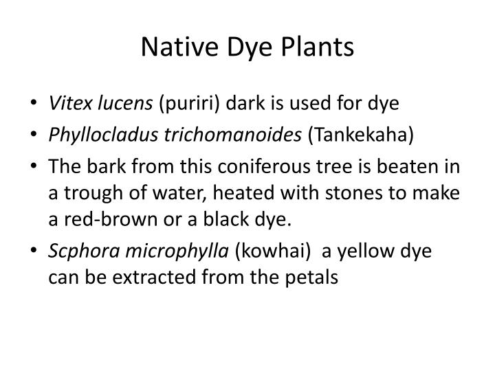 Native Dye Plants
