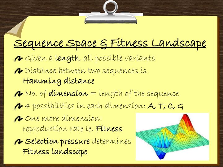 Sequence Space & Fitness Landscape