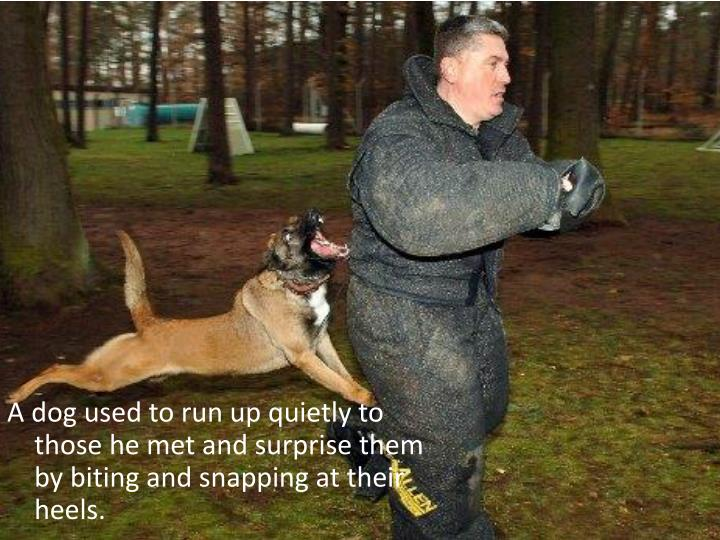 A dog used to run up quietly to those he met and surprise them by biting and snapping at their heels.