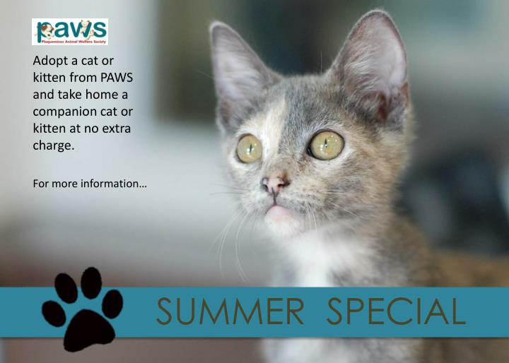 Adopt a cat or kitten from PAWS and take home a companion cat or kitten