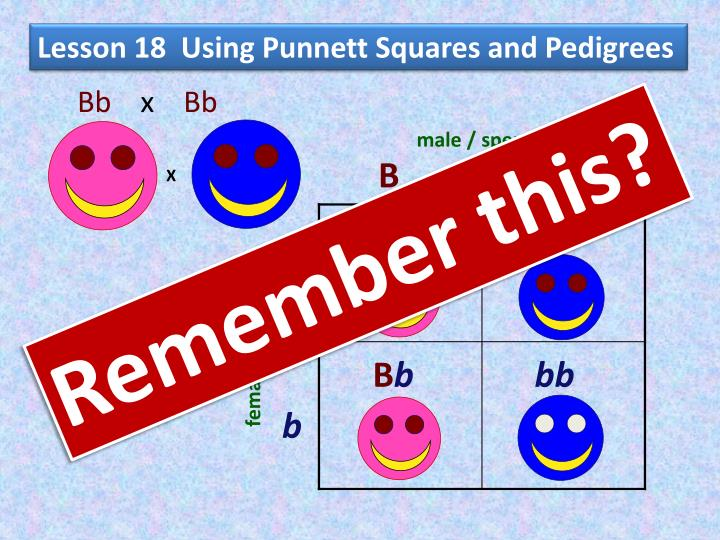 Lesson 18 using punnett squares and pedigrees