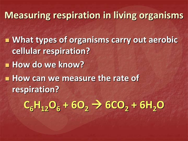 Measuring respiration in living organisms