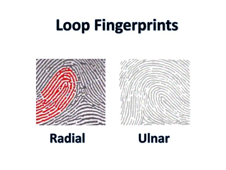 Loop Fingerprints