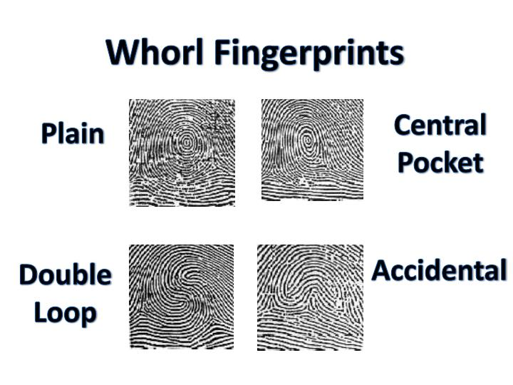 Whorl Fingerprints