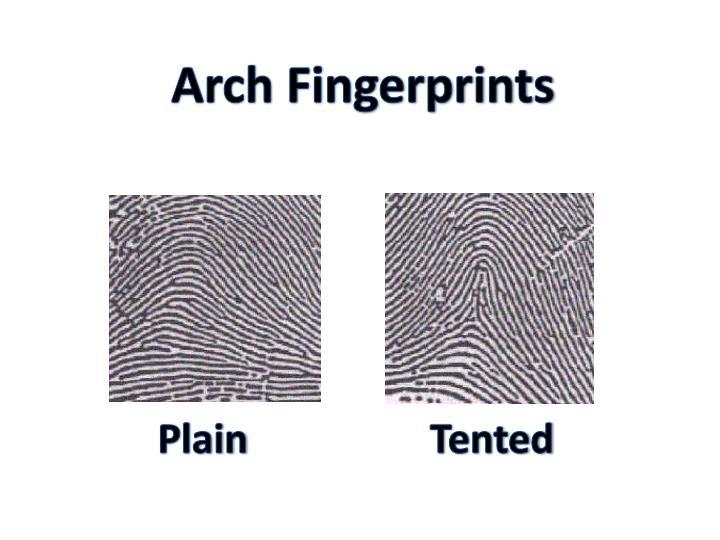 Arch Fingerprints