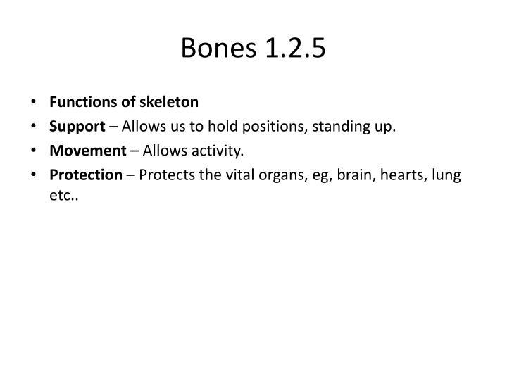Bones 1.2.5