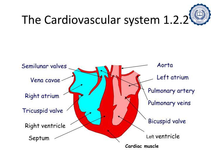The Cardiovascular system 1.2.2