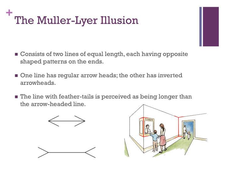 The Muller-